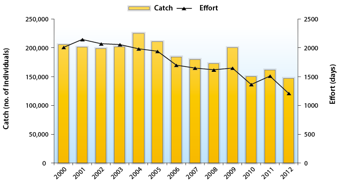 Catch - Effort chart